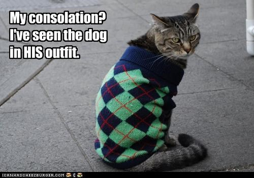 argyle,caption,captioned,cat,consolation,dogs,dressed up,outfit,schadenfreude,sweater,upset