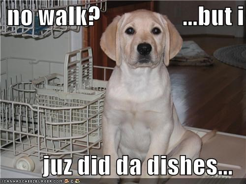 chores dishes golden retriever no puppy puppy eyes Sad walk
