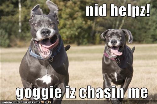 chase,derp,goggie,mean