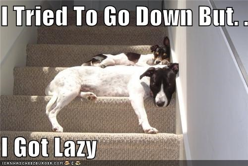 FAIL going down halfway jack russel terrier lazy mixed breed stairs stopping tried