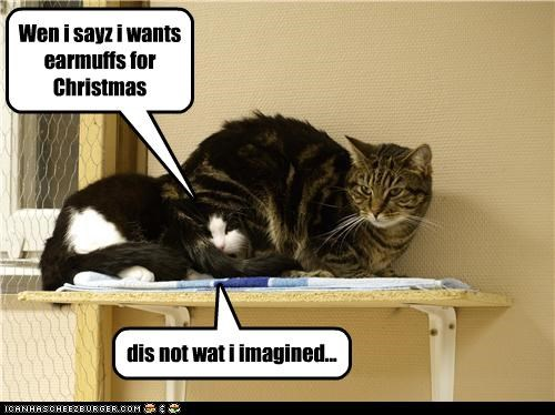 caption,captioned,cat,Cats,christmas,earmuffs,misinterpretation,present,request,wrong idea