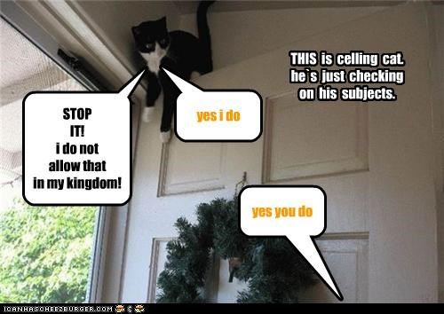 THIS is celling cat. he`s just checking on his subjects. STOP IT! i do not allow that in my kingdom! yes you do yes i do