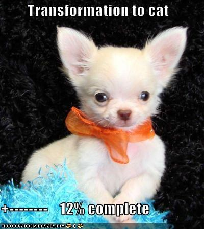 Cheezburger Image 4050804224