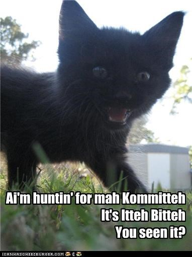 caption captioned cat hunting itteh bitteh kitteh committeh kitteh kitten question you-seen-it - 4051216896