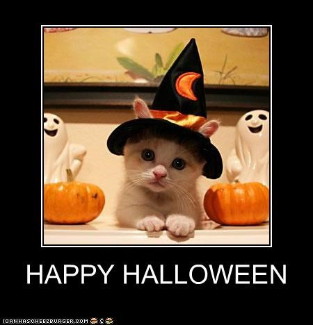 adorbz caption captioned cat cute dressed up Hall of Fame halloween happy hate kitten meowloween sweet - 4051464448