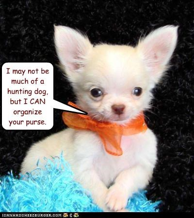 chihuahua,compensation,consolation,Hall of Fame,hunting dog,not,optimism,organizing,puppy,purse,talent
