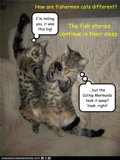 How are fishermen cats different? The fish stories continue in their sleep. I'm telling you, it was this big! ...but the Catnip Mermaids took it away? Yeah, right!