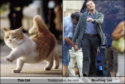 actors,Cats,Hall of Fame,leonardo dicaprio,meme,strutting leo