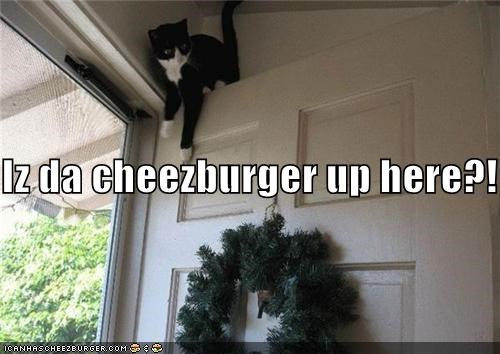 Cheezburger Image 4053234944