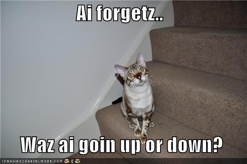 caption,captioned,cat,confusion,direction,down,going,i forget,stairs,up