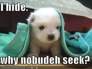 confused hide hide and seek hiding nobody puppy question Sad seek whatbreed - 4053524992