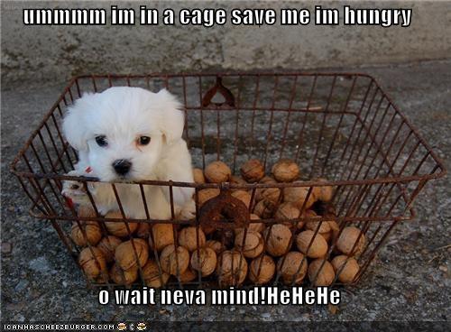 Cheezburger Image 4053989632