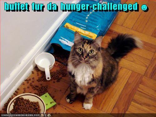 Cheezburger Image 4054396416