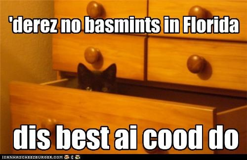 basement cat best i could do bureau caption captioned cat dresser florida no basement none substitute
