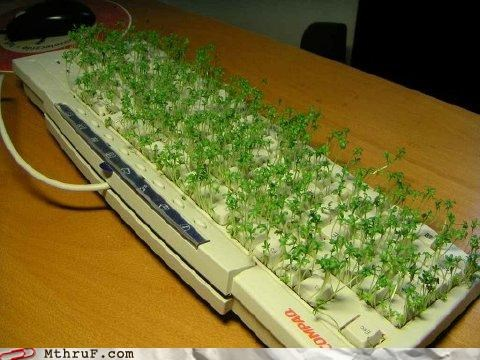 bad idea bagels eating keyboard plants