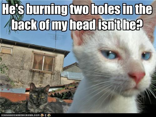 burning caption captioned cat Cats Death glare isnt-he question Staring - 4055945472