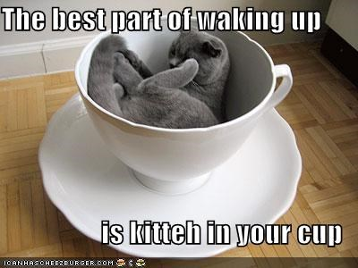adage caption captioned cat cup cute kitteh sleeping slogan snuggling waking up - 4056333568