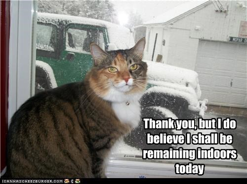 caption captioned cat declined indoors not appealing offer remaining snow thank you today