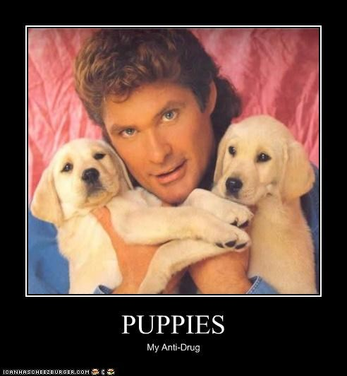 Puppies Pop Culture Funny Celebrity Pictures