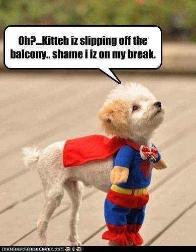 break cat costume Hall of Fame help in trouble observation poodle shame slipping superman - 4058277888