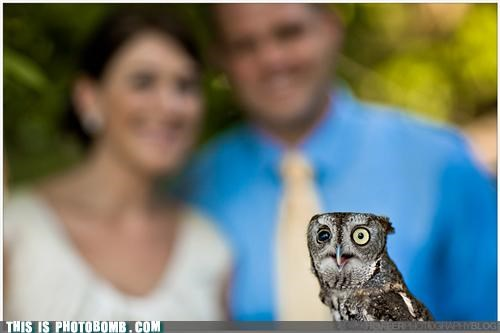 animals,funny eyes,out of focus,owls,photobombs,puns