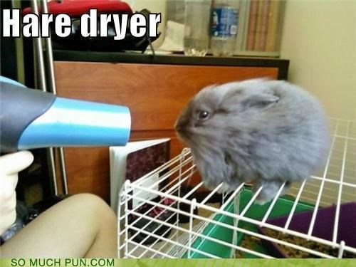 air blowdryer blowing bunny cute dryer hair hairdryer hare