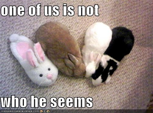 bunny caption captioned impostor one of us rabbits sleeping slipper - 4059613440