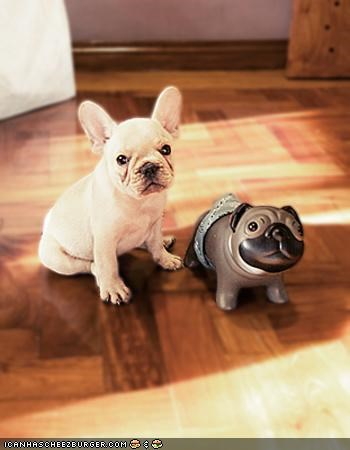 comparison,competition,cute,cyoot puppeh ob teh day,french bulldogs,pretty sure,puppy,statue,toy