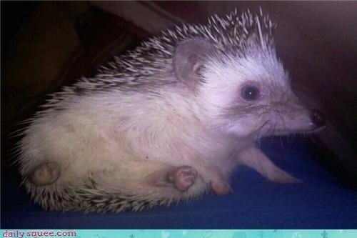 hedgehog nerd jokes Pokémon - 4060201216