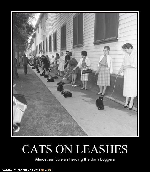 CATS ON LEASHES Almost as futile as herding the darn buggers