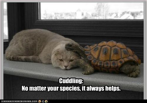 always,caption,captioned,cat,cuddling,doesnt matter,Hall of Fame,helps,species,turtle
