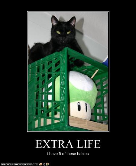 1 up,caption,captioned,cat,extra life,mario,mushroom,nine,plush toy