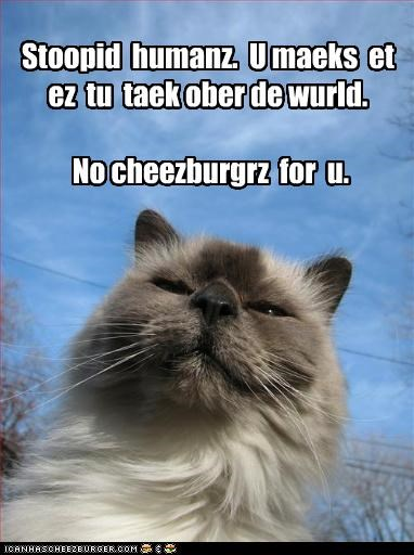 Cheezburger Image 4061920000