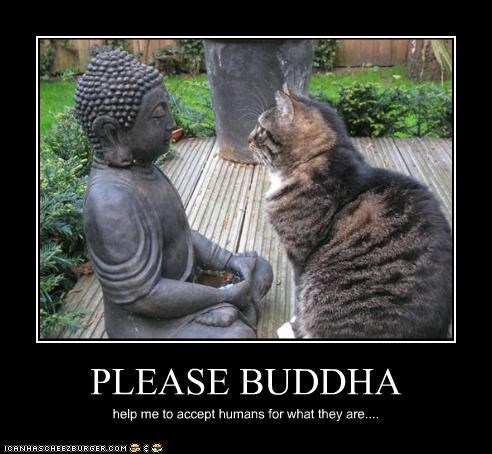 acceptance,buddha,caption,captioned,cat,humans,pleading,prayer,statue,the way they are