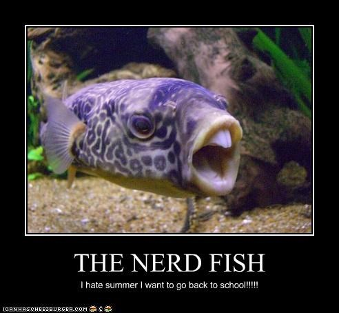 critters,fish,nerd,school,summer,underwater