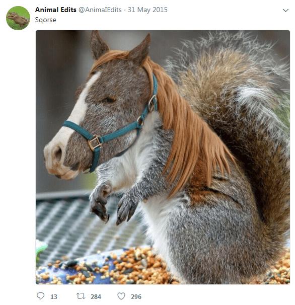 hybrid animals photoshops