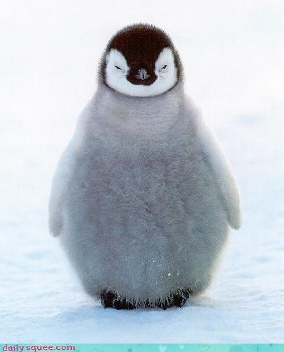 baby floof penguin - 4063467776