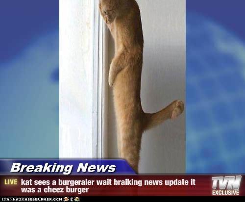 Breaking News - kat sees a burgeraler wait braiking news