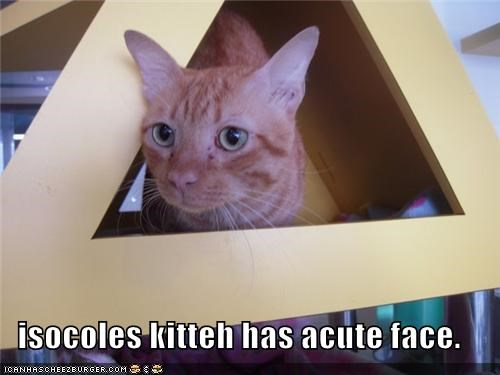 acute caption captioned cat cute face Hall of Fame isosceles kitteh pun triangle - 4063763456