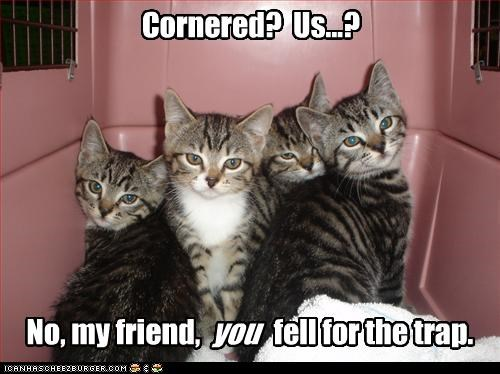 bait,caption,captioned,cat,Cats,cornered,fell for it,lure,no,trap,trick,us,you