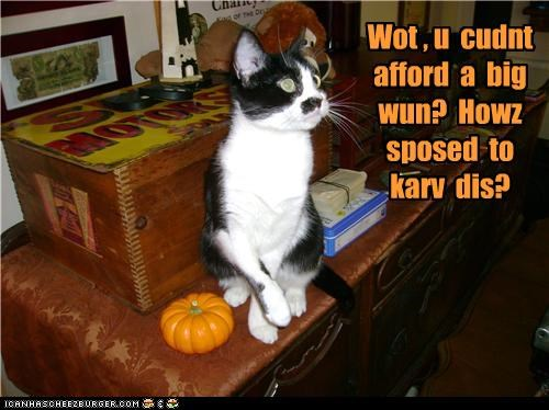 afford,cant,caption,captioned,carving,cat,halloween,how,meowloween,pumpkins,question,small,too poor,upset