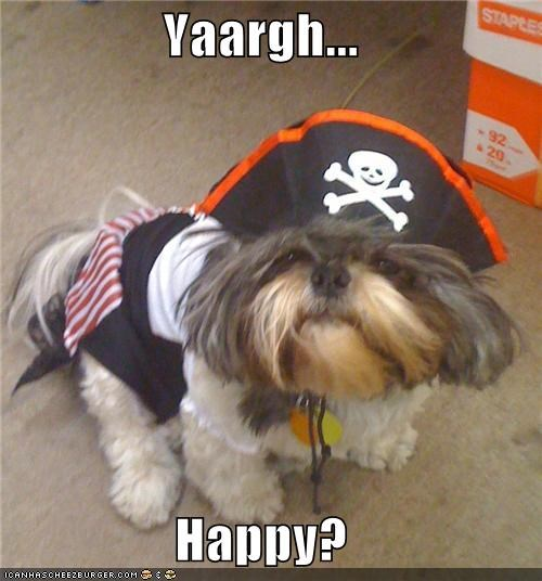 costume,cute,happy,pekingese,Pirate,question,roleplaying,scary noise,yaargh