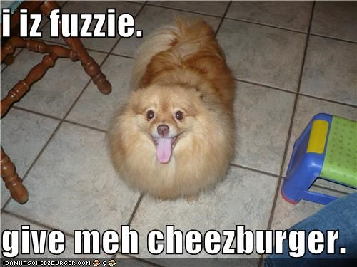 Cheezburger Image 4066059008