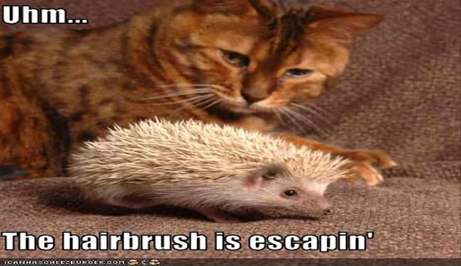 a funny list of hedgehog memes