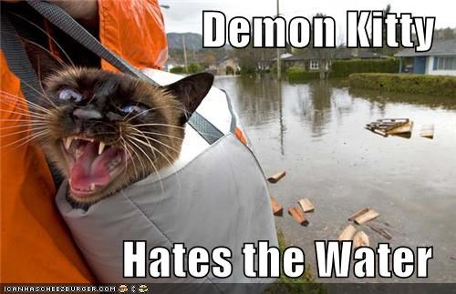 Demon Kitty  Hates the Water
