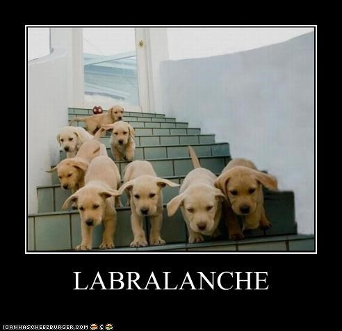 avalanche cute pun puppies puppy running stairs - 4066609920