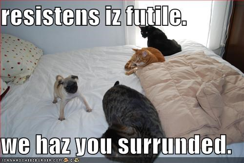 bed,Cats,danger,futility,pug,resistance is futile,surrounded,trouble
