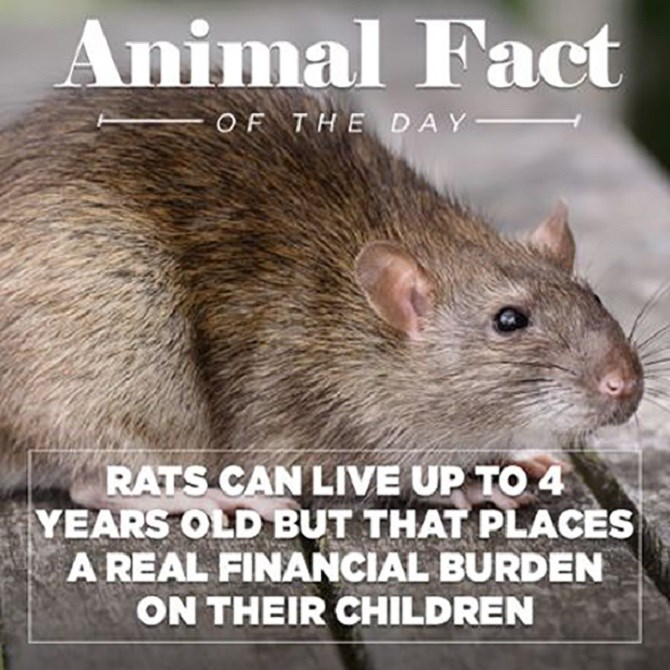 twisted animal facts