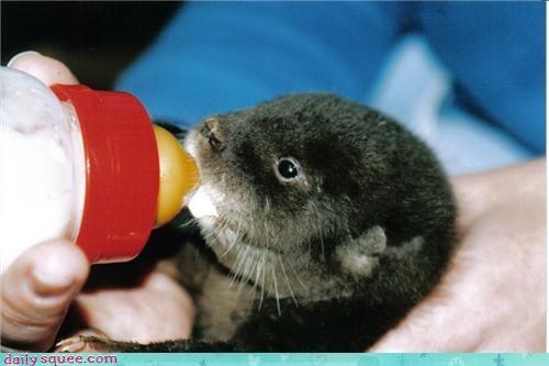 baby Om Nom Monday otter - 4067316224