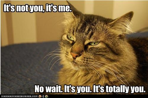 breakup caption captioned cat contempt correction me not you wait you - 4067821824